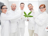 Scientists holding a genetically modified leaf