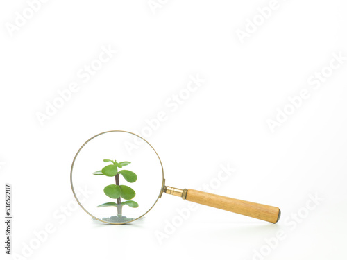 studying a plant through a magnifying glass