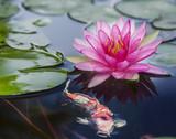 Fototapety Pink lotus