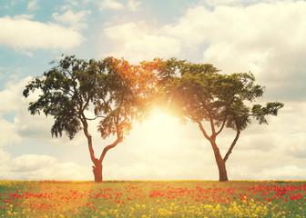 trees sun flare