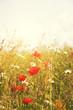 sunshine poppies