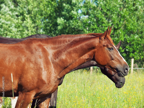young mare in the pasture