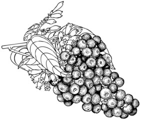 Branch of Plant Cestrum purpureum