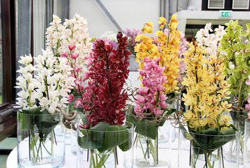 Beautiful orchids in the vases
