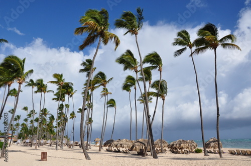Coconut trees along the white sand beach