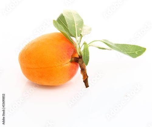 Abricot sur fond blanc
