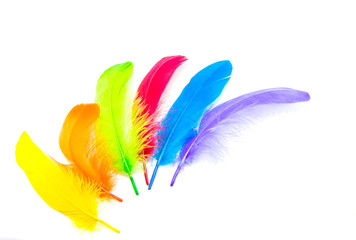 colors feather
