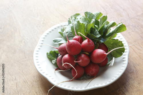 Garden Fresh Radishes On White Plate