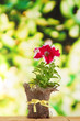 Petunia in pot on wooden table on nature background