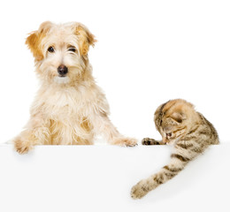 Cat and Dog above white banner looking at camera. isolated