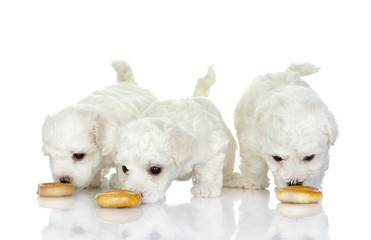 eating puppies. isolated on white background