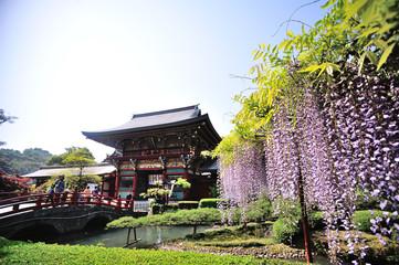 フジと神社
