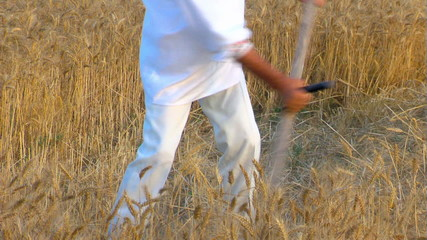 Peasant reaping wheat with a scythe