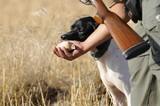 Hunting quail poster