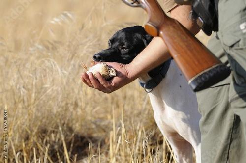 Fotobehang Jacht Hunting quail
