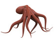 Octopus Isolated - 53710052