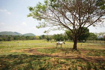livestock, a horse eating grass in livestock farmland