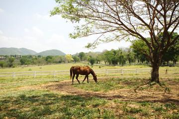 livestock, a horse in livestock farmland