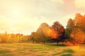 autumn sunflare