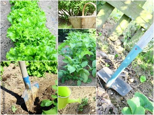 composition de jardinage