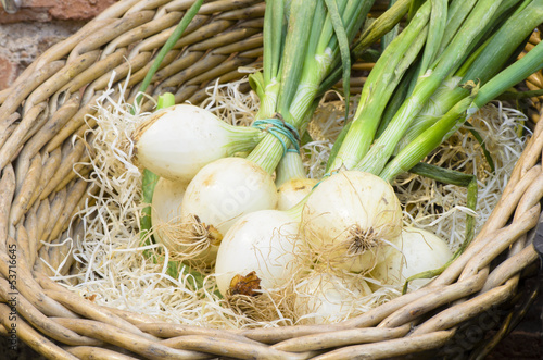 Onions in Twigs Basket