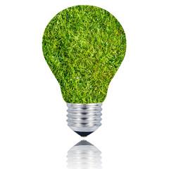 lampadina erba