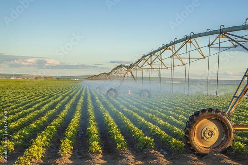 potato field - 53723659