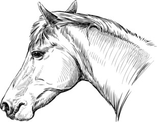 portrait of horse