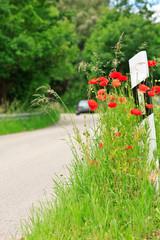 Straßenrand mit Leitpfosten und Mohnblumen