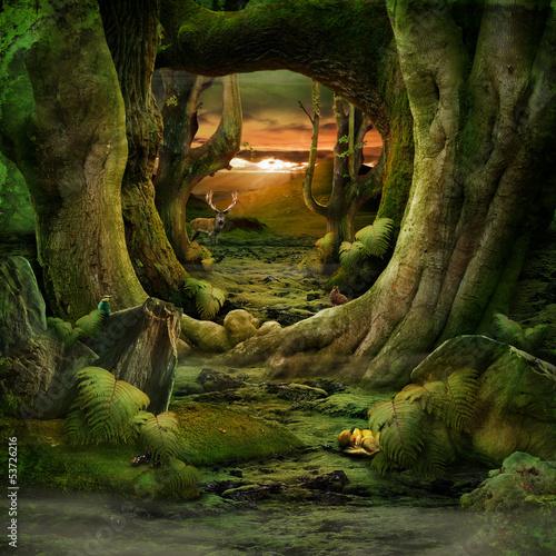 Fototapeten,wald,moos,landschaft,natur