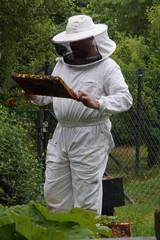 Imker im Schutzanzug umschwirrt von Bienen