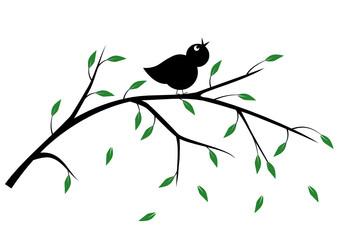 singvogel auf ast
