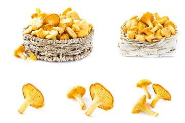 Collage of chanterelle mushroom on white backgtound, variants
