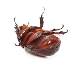 beetle legs white. macro