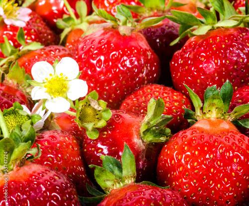 Aroma des Sommers: Frisch gepflückte Erdbeeren