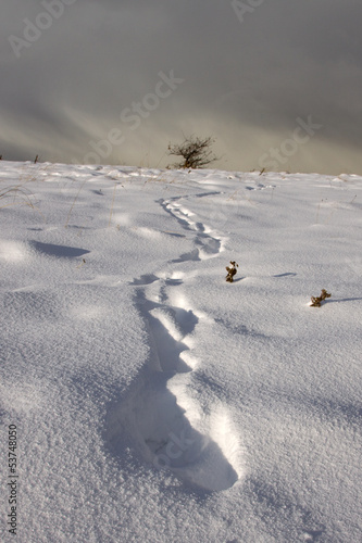 Footprint Trail in Winter Landscape