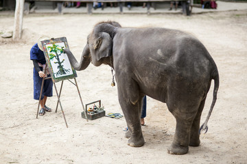 Elephant drawing a picture , Chiangmai, Thailand
