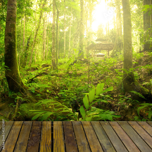 rainforest with ray of lights and plank woods, suitable for prod
