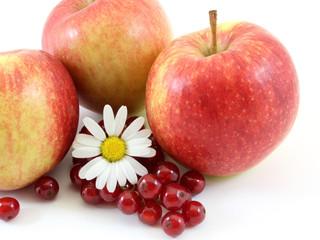 Gartenfrüchte