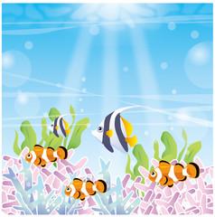 熱帯魚の海