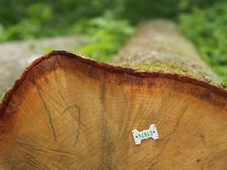 Plakette kennzeichnet gerodeten Baumstamm