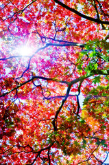 sunshine leaves