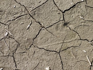 Very dry cracked soil with small straws