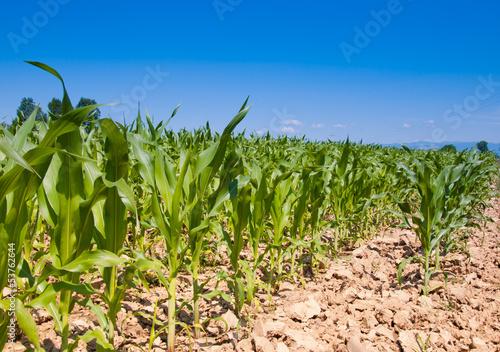 Fototapeten,landwirtschaft,ernährung,pflügen,feld