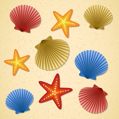 Seashells and starfishes