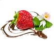 Leckerer Sommer-Genuss: Frische Erdbeere mit Schokoherz