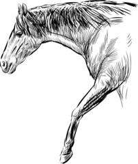 stridig horse