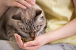 Unrecognizable woman feeding her tabby cat at home