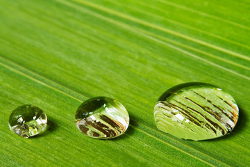 three droplets on leaf background