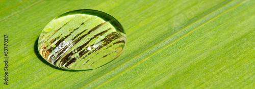 rain drop on leaf background